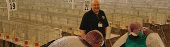 Pigeon show comes to Blackpool